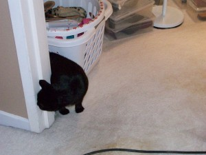 Bionic Kitty doesn't know what to make of flying carpet and dehumidifiers