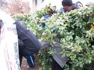 Shoving through shrubbery.